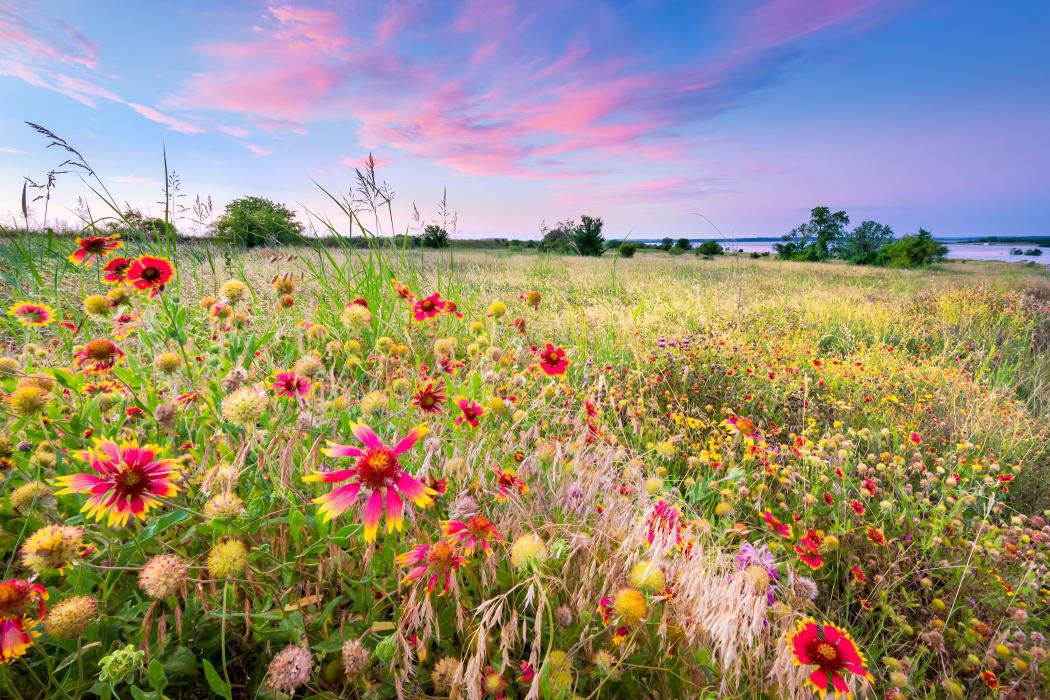 Wildflowers growing near The Arbors of Carrollton in Carrollton, Texas