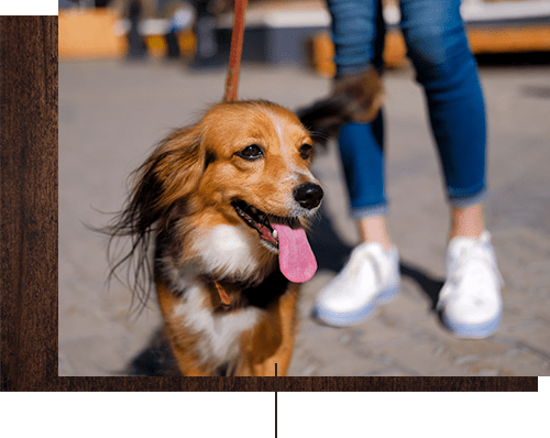 Happy dog with her owner near Rosewalk in San Jose, California