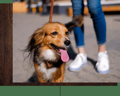 Happy dog with her owner near Venu at Galleria Condominium Rentals in Roseville, California