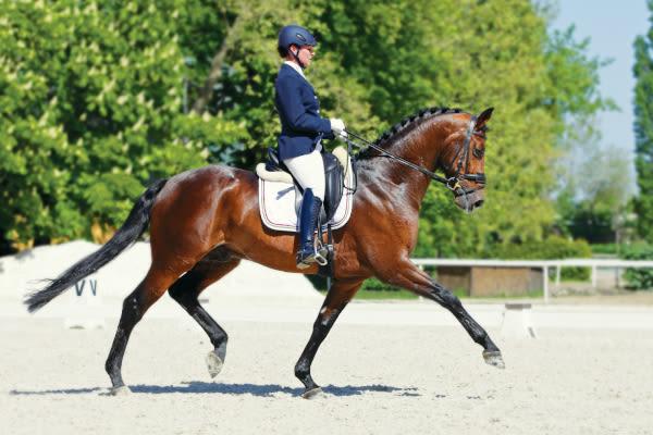NVA vet bandaging a horse's leg