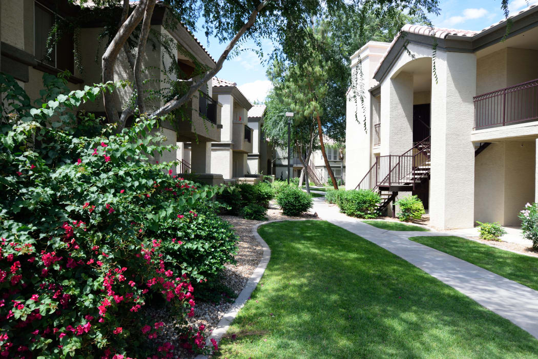 Well-manicured green spaces between resident buildings at Lumiere Chandler in Chandler, Arizona