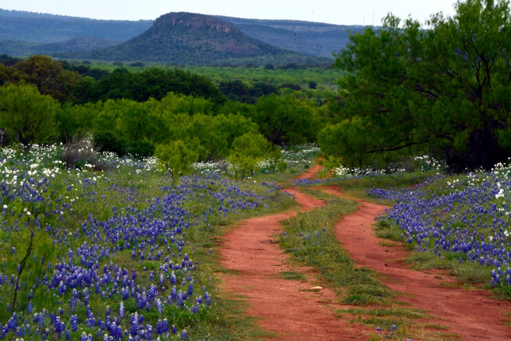 Dirt road among wildflowers in the wilderness near Trails at Buda Ranch in Buda, Texas