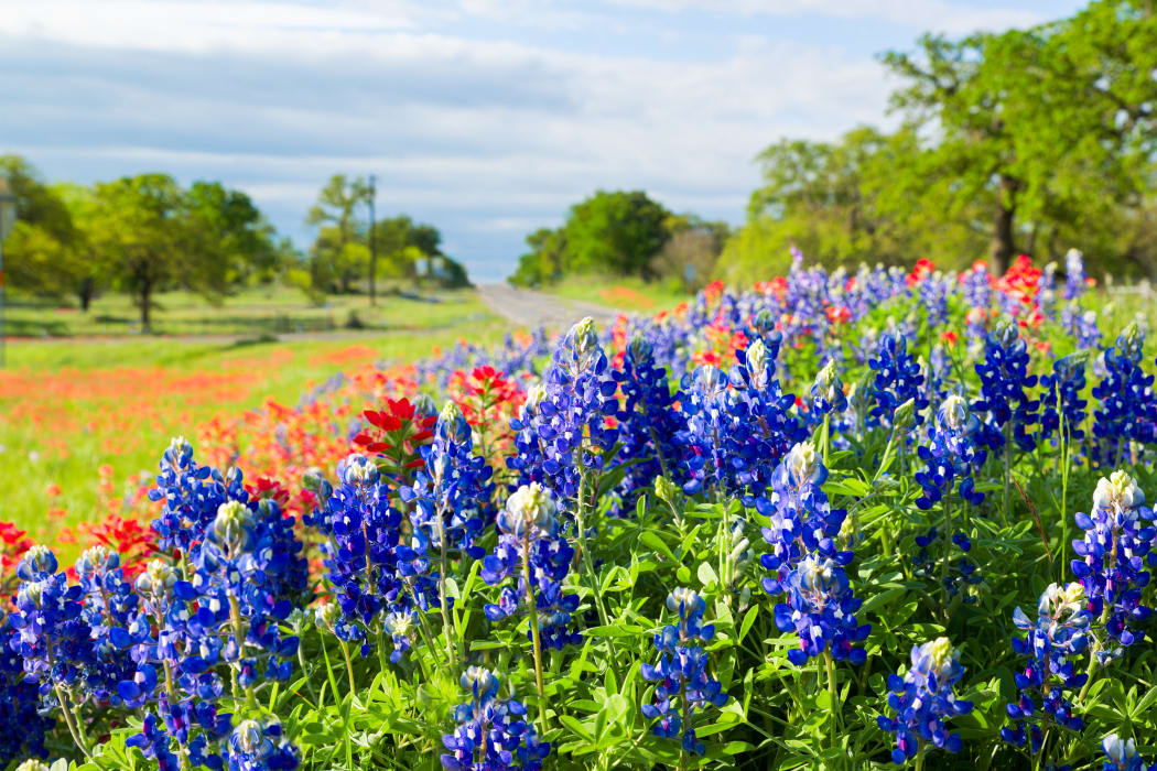 Wildflowers growing near The Belmont in Grand Prairie, Texas