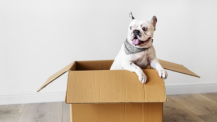 Preparing to move with your pet
