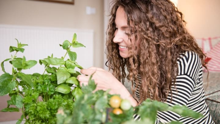 Women picking leaves from her basil plant in her home at The Davis located in Fort Worth, Texas