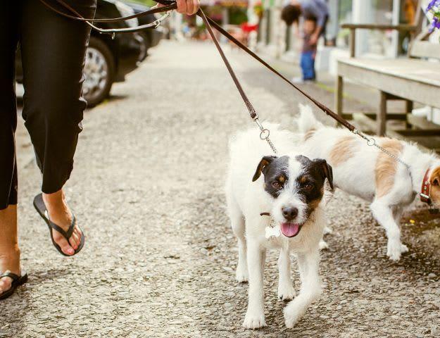 Montessa resident walking her dogs in Portland, Oregon