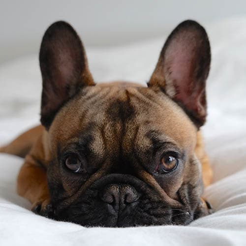 View the pet policy at Park at Winterset Apartments in Owings Mills, Maryland