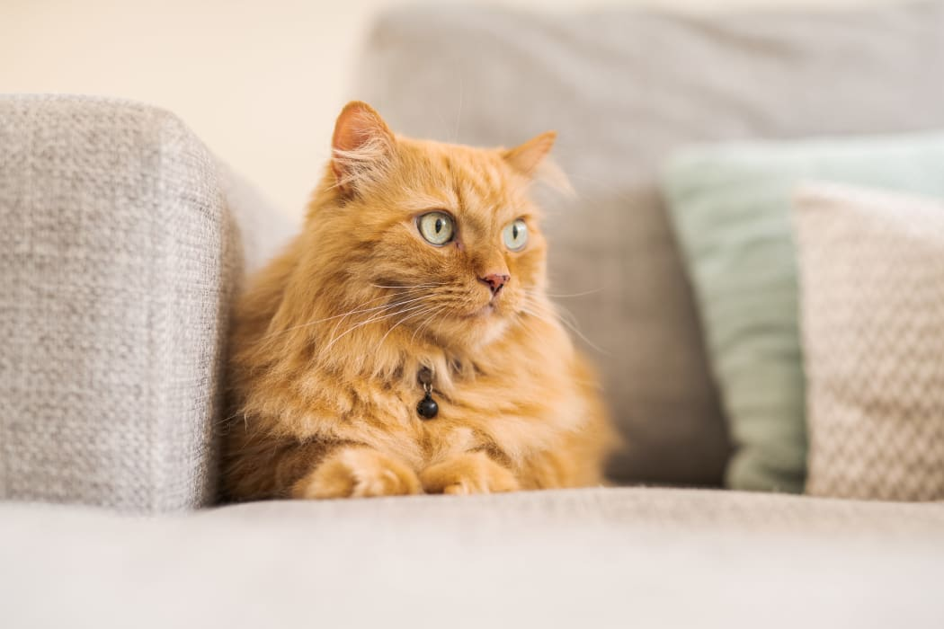 Orange cat enjoying its new home at Orchard Hills Apartments in Whitehall, Pennsylvania