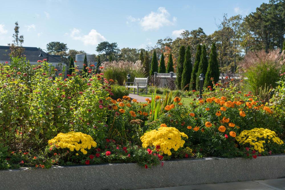 beautiful garden at Maplewood at Brewster in Brewster, Massachusetts