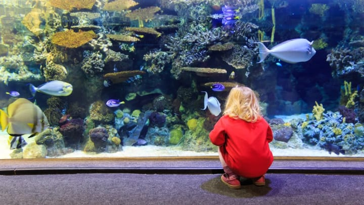 Child fascinated by sea life swimming by at the Dallas World Aquarium near Union at Carrollton Square in Carrollton, Texas