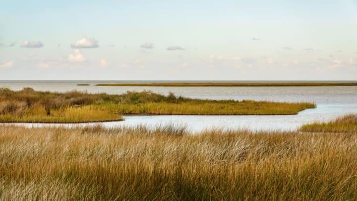 Wild grass and watering holes on the Savannah National Wildlife Refuge near The Slate in Savannah, Georgia