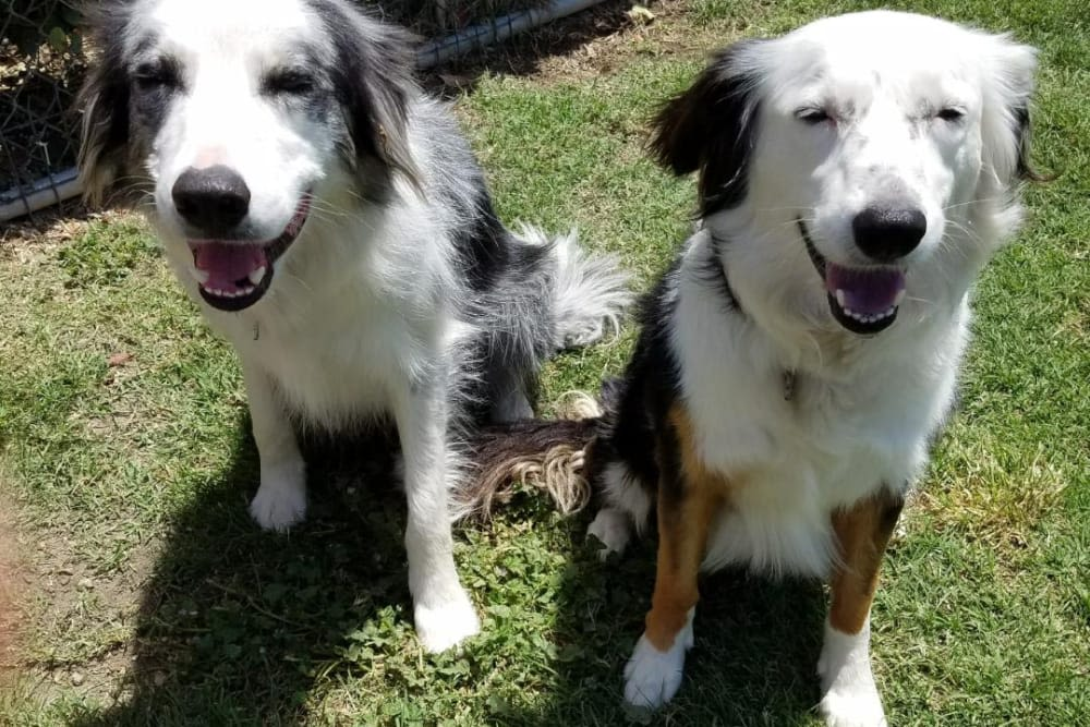 Dogs posing for a picture in the sun at University Pet Resort in Merced, California