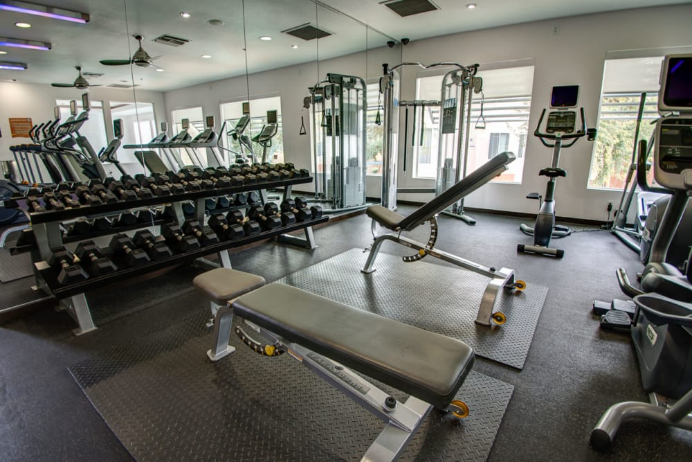 Weights in gym at Sage Luxury Apartment Homes in Phoenix, Arizona