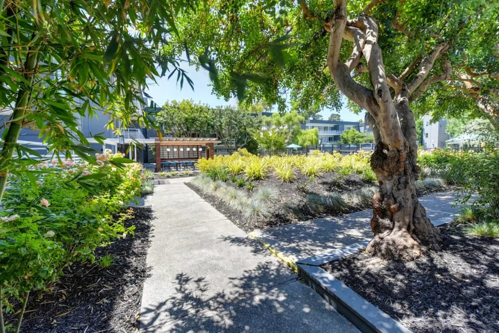 Walking path at Citra in Sunnyvale, California