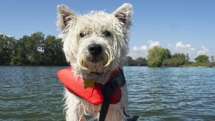 Happy pup on a standup paddleboard near Elevation Chandler in Chandler, Arizona