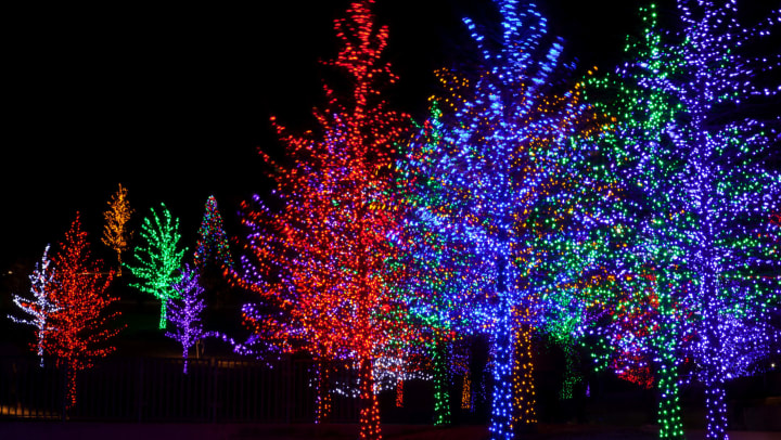 Outdoor trees stung with festive lights near Olympus Las Colinas