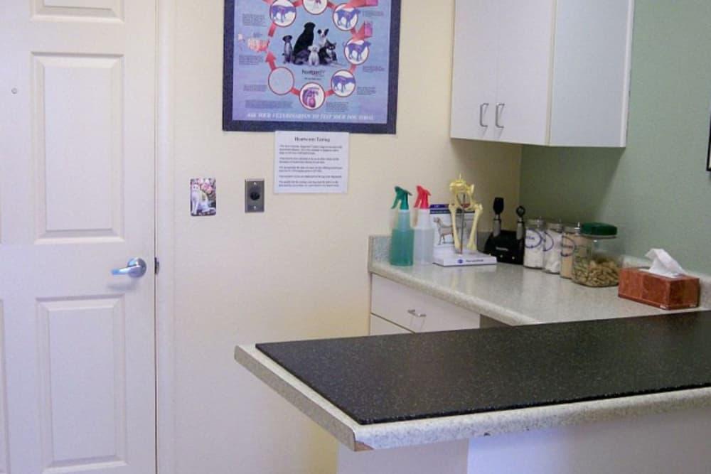 Exam room at Red Mountain Animal Hospital in Mesa, Arizona