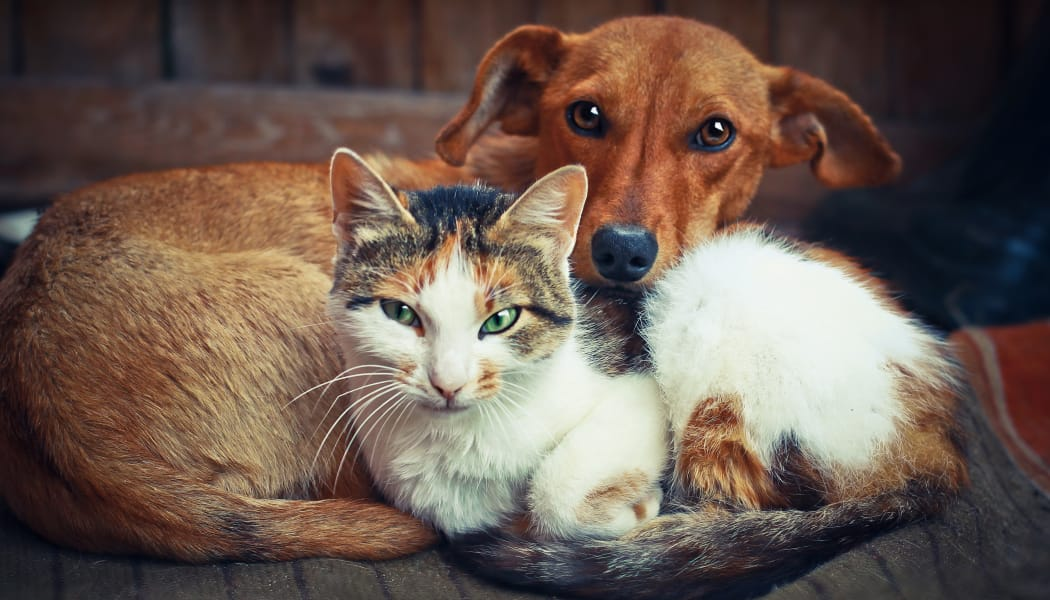 Dog and cat resting together in their new home at IMT Park Encino in Encino, CA