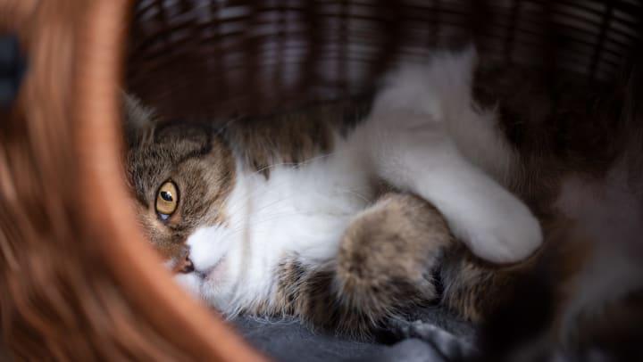Cat lying on its side in a basket