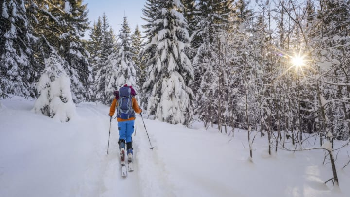 Person skis through snowy backcountry forest