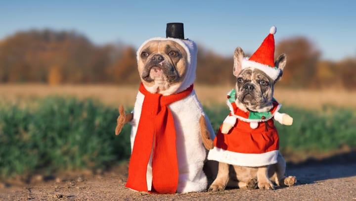 Two smaller dogs dressed in festive costumes for the holidays