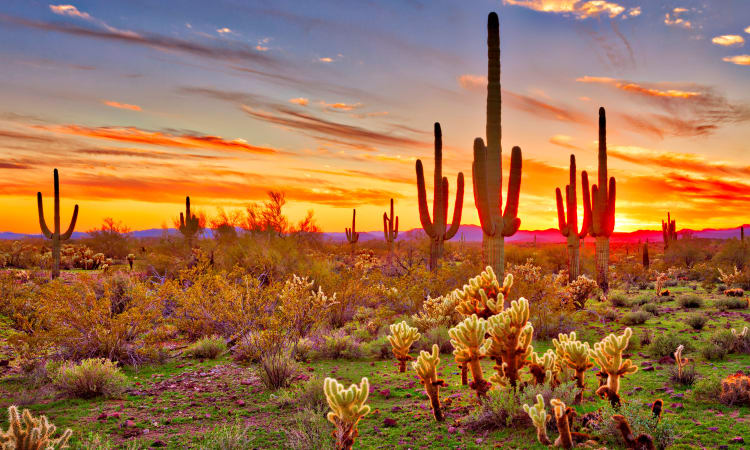 Beautiful desert sunset near The Boulevard in Phoenix, Arizona
