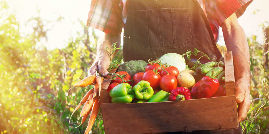 Our chefs use only local, farm-fresh ingredients here at Mill Hill Residence in West Yarmouth, Massachusetts