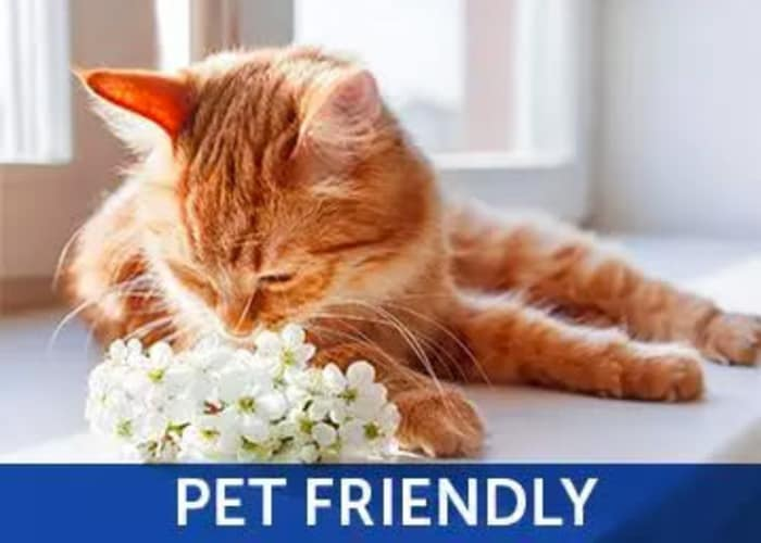 We're pet friendly at Alvista Sterling Palms