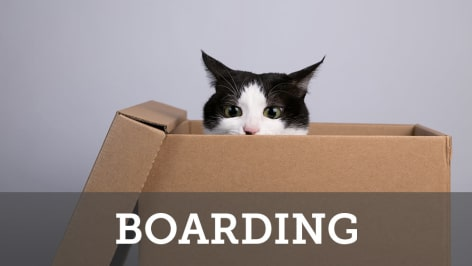 Cat boarding at Civic Feline Clinic in Walnut Creek, CA