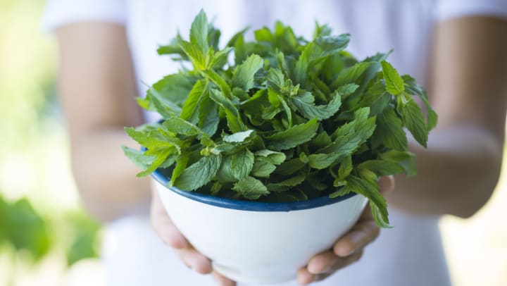 A person holding a green mint plant