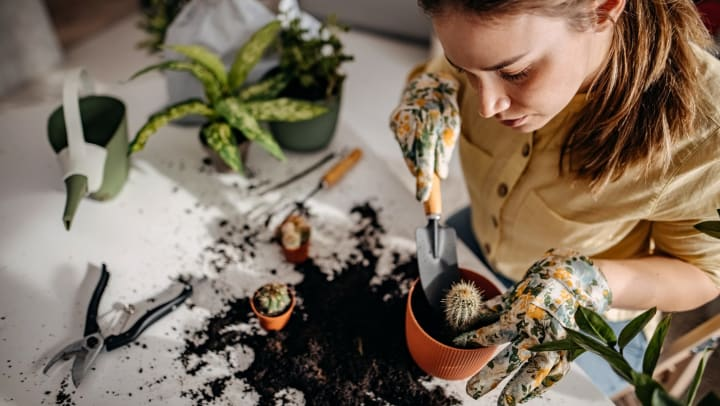 Overhead view of a young woman planting a cactus in a pot, with other plants, soil, and gardening tools laying on the counter around her.