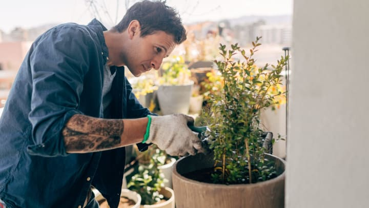 A man with tattoos is taking care of his plants on a sunny balcony.