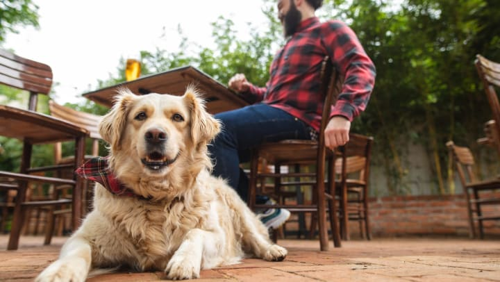 Dog lying on ground facing camera with owner in the background sitting in a chair with a glass of beer in front of him.