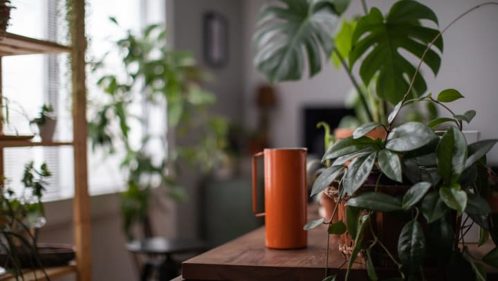 Watering can next to many indoor houseplants.