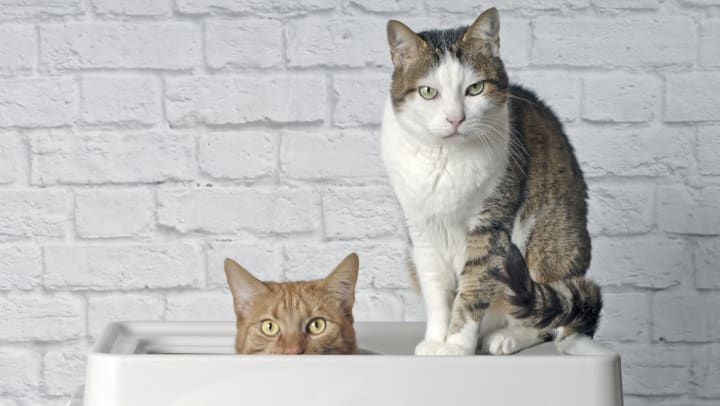 An orange cat sits in a top-entry litter box beside a tabby cat who is looking curiously at the camera.
