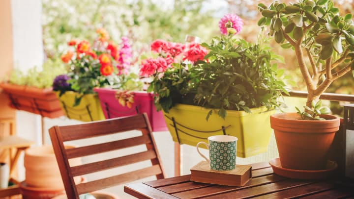 Cozy balcony with many potted plants, cup of tea and old vintage book on a wooden bistro set.