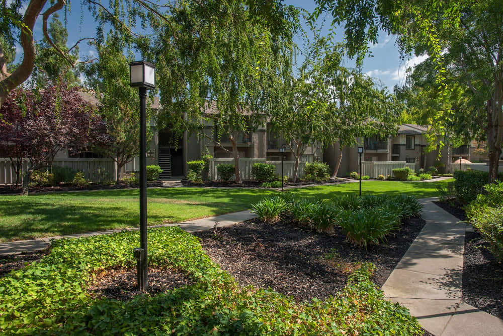 Large grass lawn for summer picnics at Valley Ridge Apartment Homes in Martinez, California
