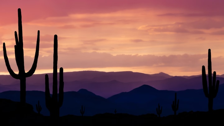 Saguaro cactus and native shrubs overlooking a sunset over Arizona mountains near Cactus Forty-2 in Phoenix, Arizona