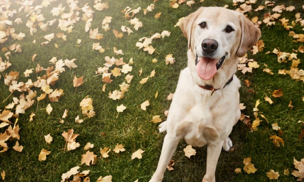 Cute dog at Woodcreek Apartments in Huntsville, Texas