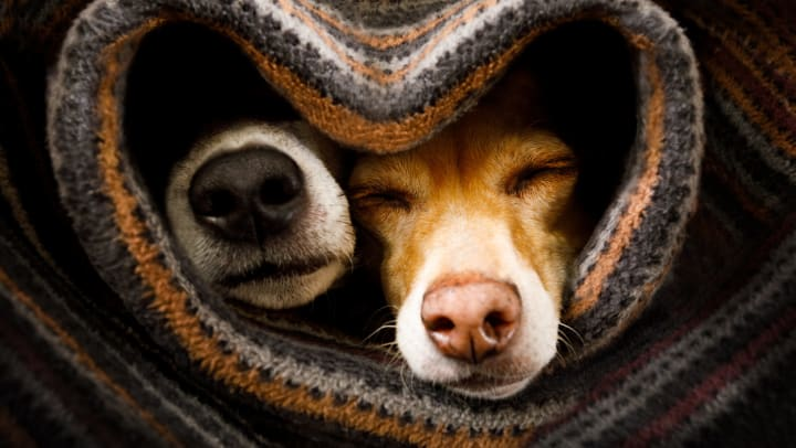 Two dogs asleep inside a woven blanket where the opening is shaped like a heart.