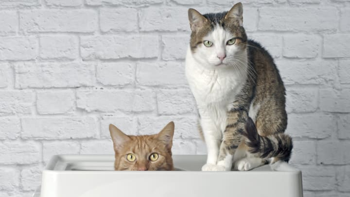 Cats sitting on litter box cleaning device