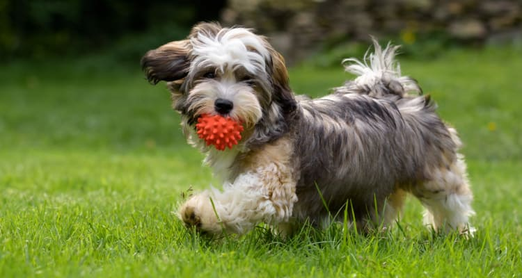 Dogs welcome at  Kiwi Goji Apartments