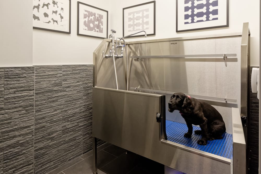 Pet bathroom at Vela on the Park in Stamford, Connecticut