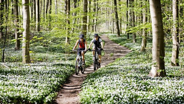 Mountain biking trail near Olympus Woodbridge in Sachse, Texas.