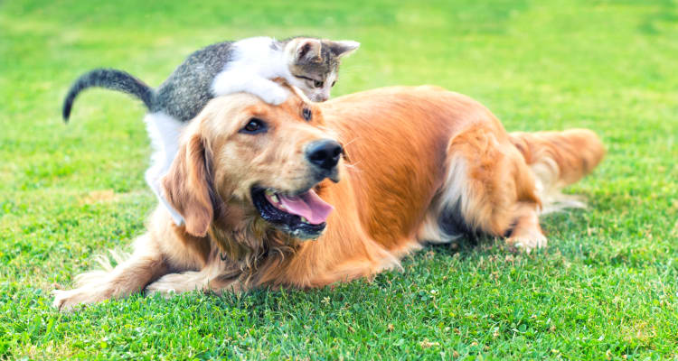 The green grass at Whispering Woods is a perfect area to let your pets play!