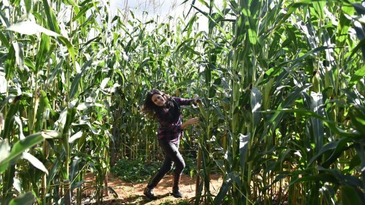 Woman enjoying a walk through a corn maze near Olympus Team Ranch