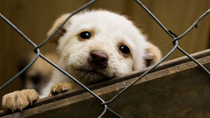 Dog looks through a hole in fencing