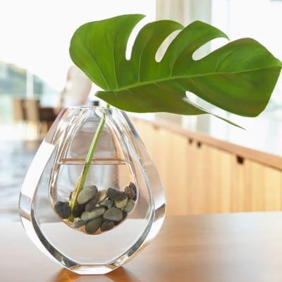 Plant in a small decorative vase at Haven Martinez in Martinez, California