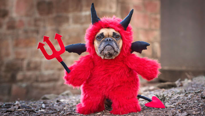 A French bulldog dog in a red devil costume.