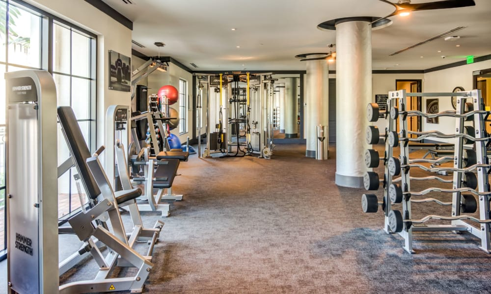Full sized fitness center and weight area for residents at 6600 Main in Miami Lakes, Florida